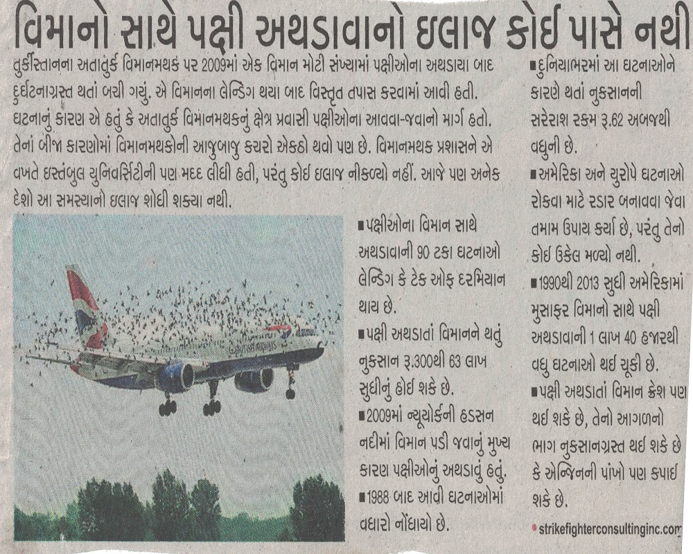 Airoplane Strike from Birds