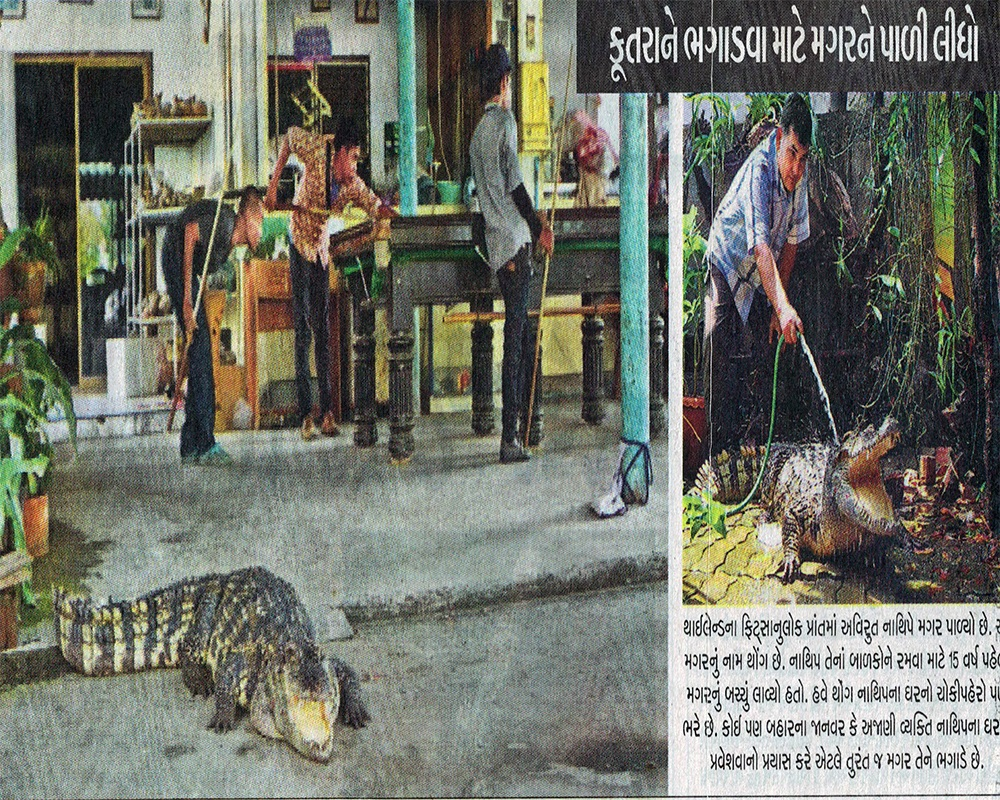 Crocodiles Guarding Thai Home